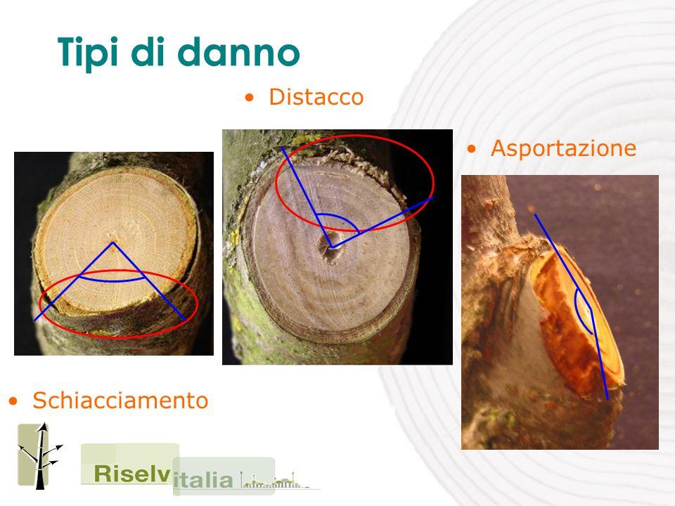 Entità del danno – modalità di taglio Il taglio deve effettuato in corrispondenza del cercine evitando il movimento rotatorio alternato dell'attrezzo