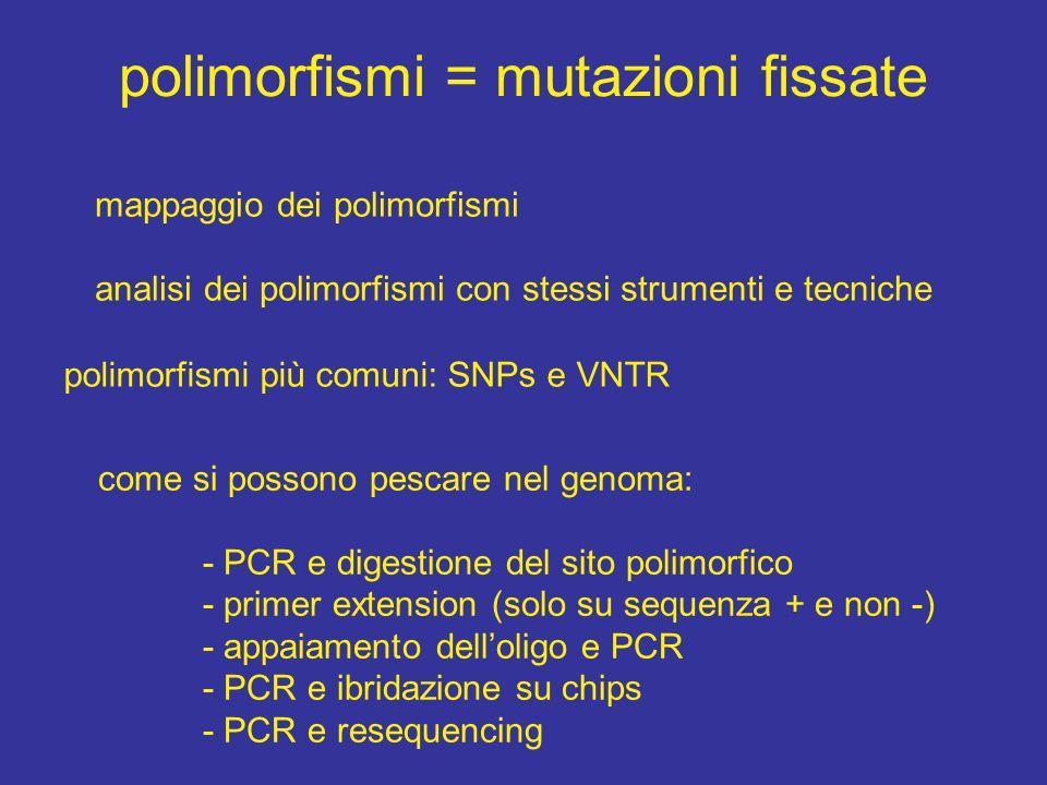 polimorfismi = mutazioni fissate mappaggio dei polimorfismi analisi dei polimorfismi con stessi strumenti e tecniche polimorfismi più comuni: SNPs e VNTR come si possono pescare nel genoma: - PCR e digestione del sito polimorfico - primer extension (solo su sequenza + e non -) - appaiamento dell'oligo e PCR - PCR e ibridazione su chips - PCR e resequencing