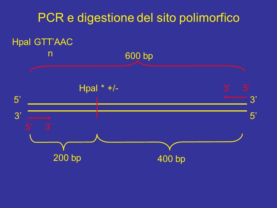 PCR e digestione del sito polimorfico 5' 3' 5' 3' 3' 5'HpaI * +/- HpaI GTT'AAC n 600 bp 400 bp 200 bp