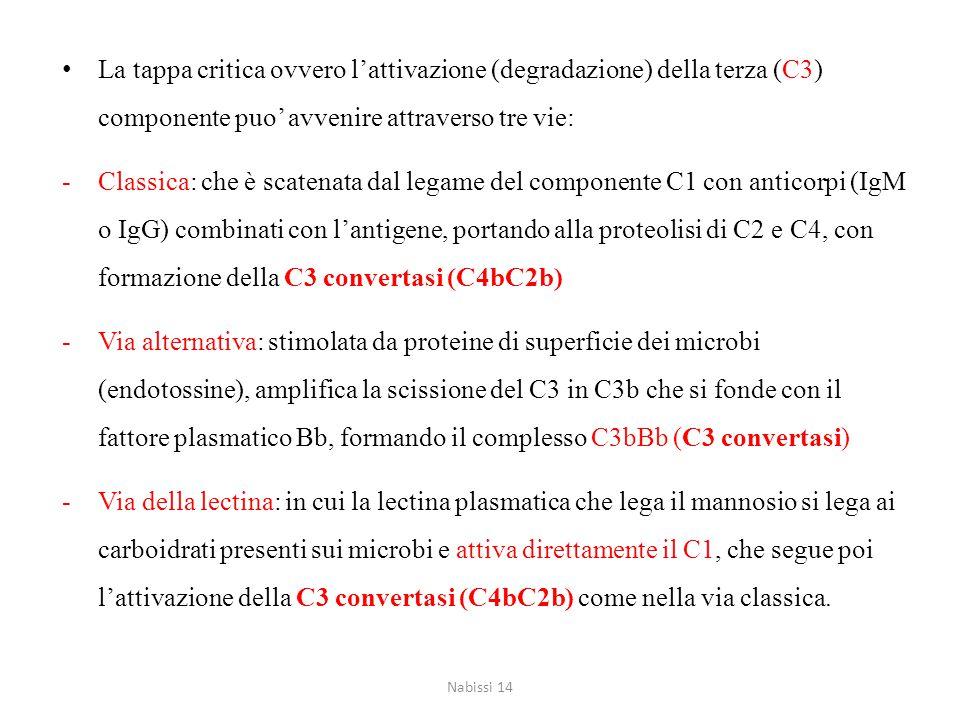 La tappa critica ovvero l'attivazione (degradazione) della terza (C3) componente puo' avvenire attraverso tre vie: -Classica: che è scatenata dal lega
