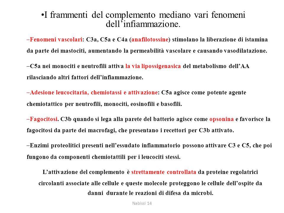 I frammenti del complemento mediano vari fenomeni dell'infiammazione. –Fenomeni vascolari: C3a, C5a e C4a (anafilotossine) stimolano la liberazione di