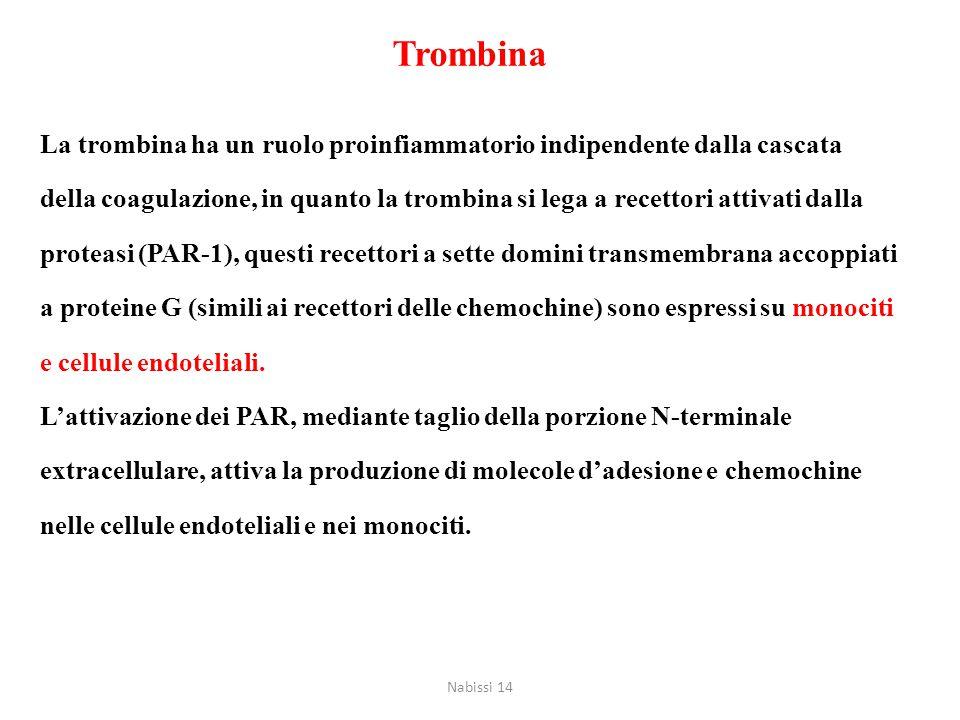 La trombina ha un ruolo proinfiammatorio indipendente dalla cascata della coagulazione, in quanto la trombina si lega a recettori attivati dalla prote