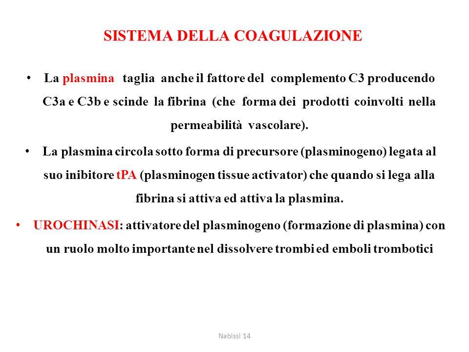 La plasmina taglia anche il fattore del complemento C3 producendo C3a e C3b e scinde la fibrina (che forma dei prodotti coinvolti nella permeabilità v