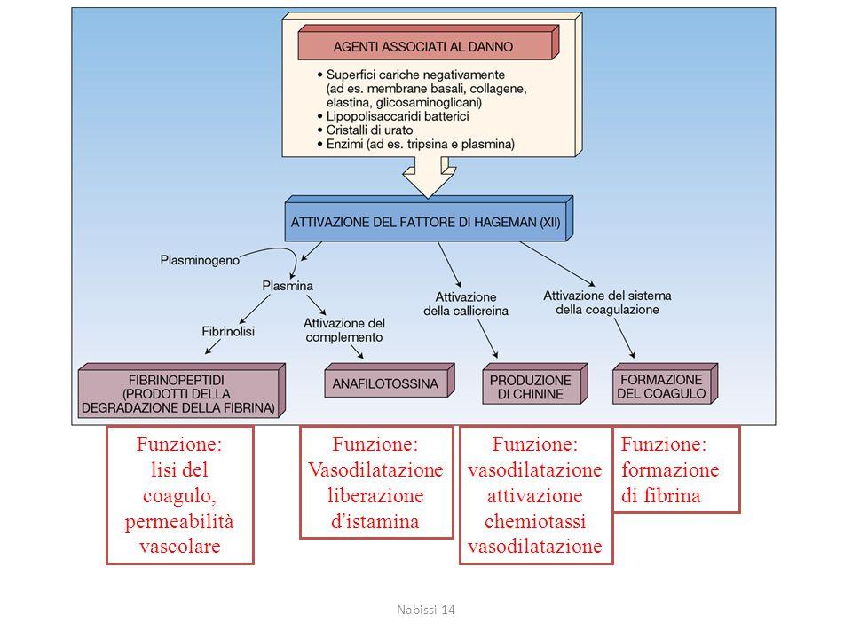 Funzione: lisi del coagulo, permeabilità vascolare Funzione: Vasodilatazione liberazione d'istamina Funzione: vasodilatazione attivazione chemiotassi