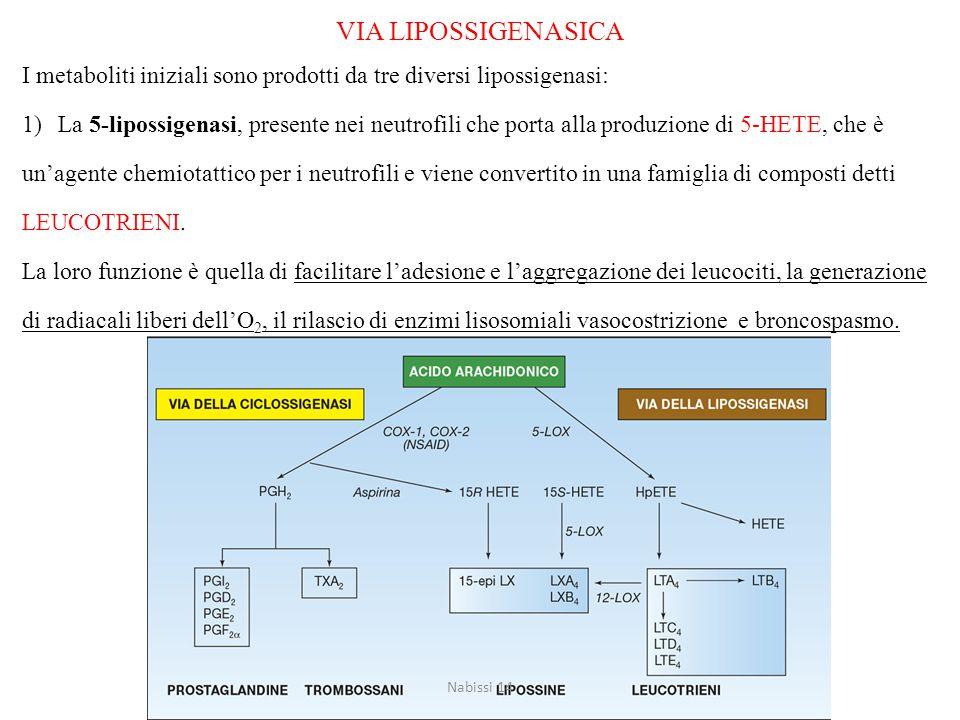 VIA LIPOSSIGENASICA I metaboliti iniziali sono prodotti da tre diversi lipossigenasi: 1)La 5-lipossigenasi, presente nei neutrofili che porta alla pro
