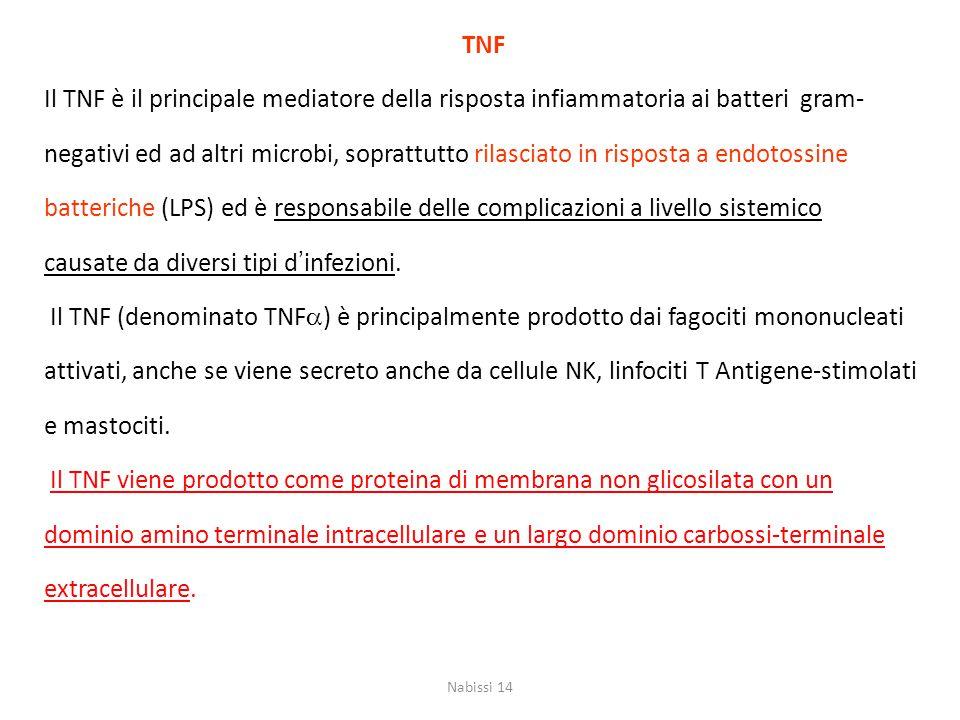 TNF Il TNF è il principale mediatore della risposta infiammatoria ai batteri gram- negativi ed ad altri microbi, soprattutto rilasciato in risposta a