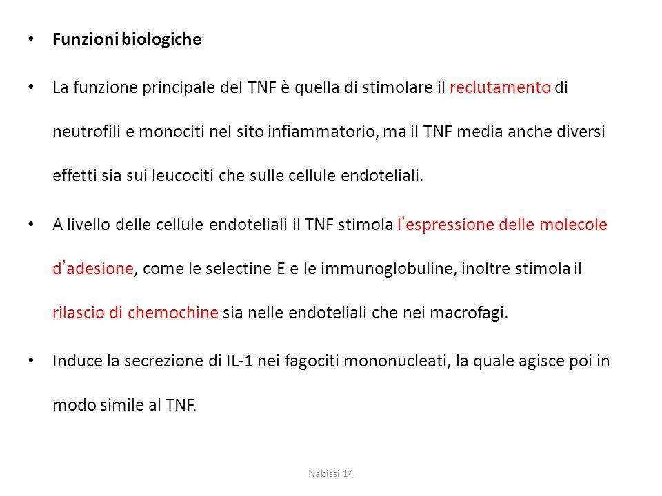 Funzioni biologiche La funzione principale del TNF è quella di stimolare il reclutamento di neutrofili e monociti nel sito infiammatorio, ma il TNF me