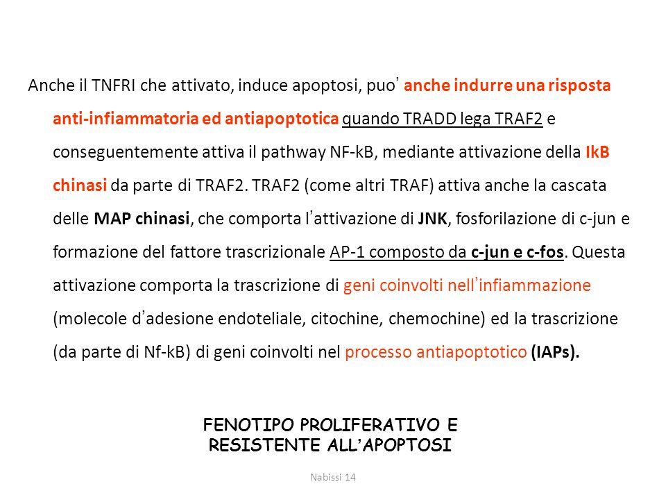 Anche il TNFRI che attivato, induce apoptosi, puo' anche indurre una risposta anti-infiammatoria ed antiapoptotica quando TRADD lega TRAF2 e conseguen
