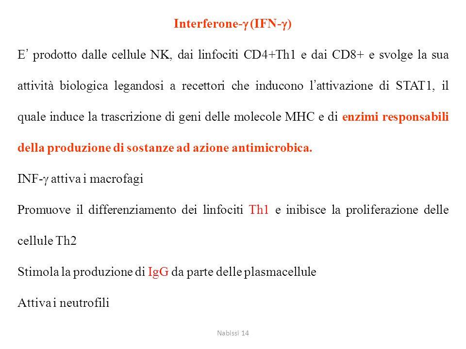 Interferone-  (IFN-  ) E' prodotto dalle cellule NK, dai linfociti CD4+Th1 e dai CD8+ e svolge la sua attività biologica legandosi a recettori che i