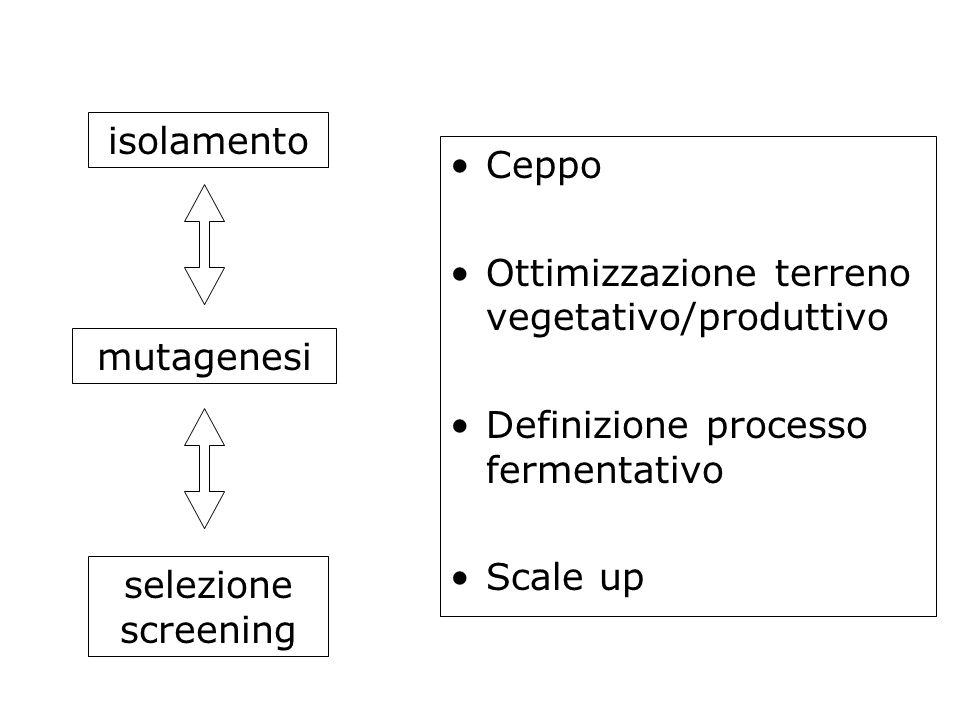Ceppo Ottimizzazione terreno vegetativo/produttivo Definizione processo fermentativo Scale up isolamento mutagenesi selezione screening