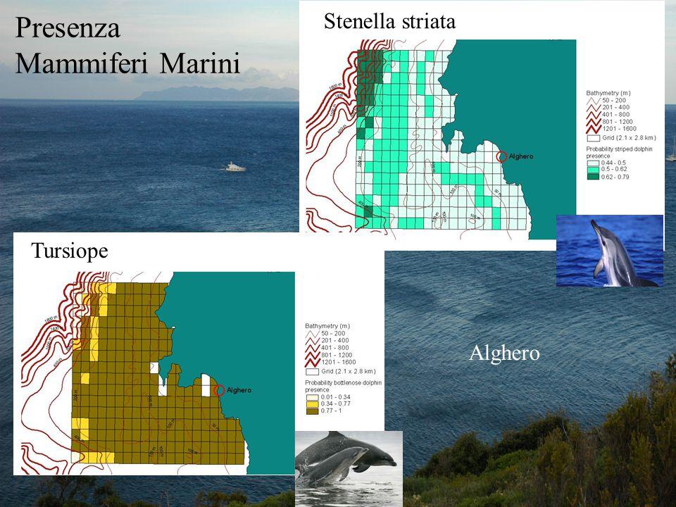 Presenza Mammiferi Marini Stenella striata Tursiope Alghero