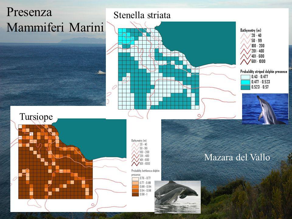 Presenza Mammiferi Marini Stenella striata Tursiope Mazara del Vallo