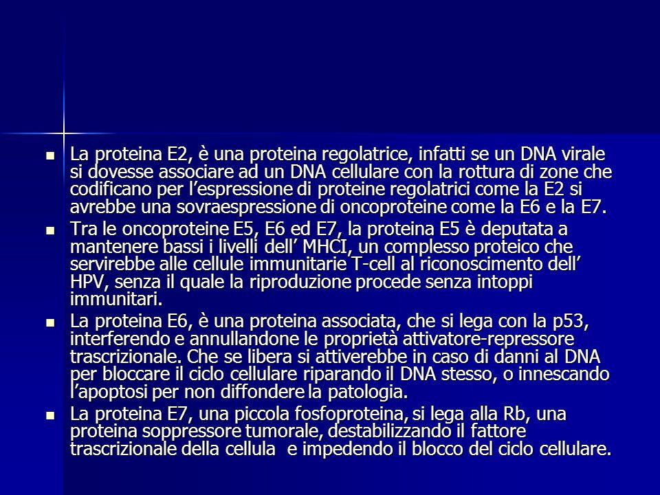 Genoma dell' HPV 8 Open Reading Frames ( ORF ) 6 Proteine Precoci ( early proteins ) ( E1, E2, E4, E5, E6, E7 ) che servono a modificare il metabolism