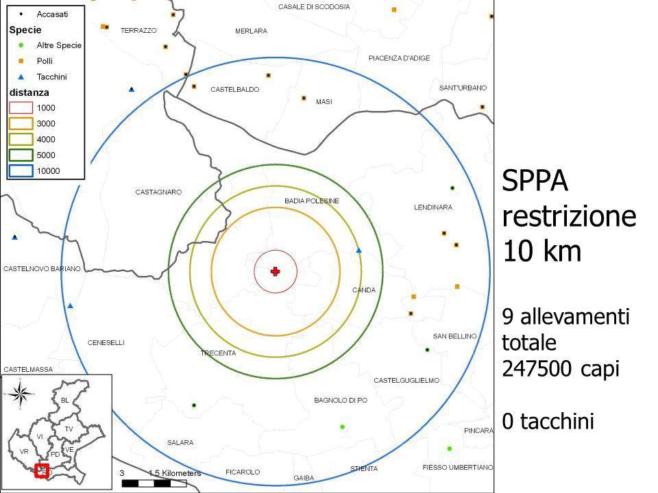 SPPA restrizione 10 km 9 allevamenti totale 247500 capi 0 tacchini