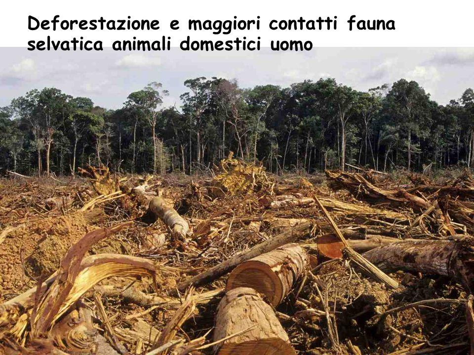 Deforestazione e maggiori contatti fauna selvatica animali domestici uomo