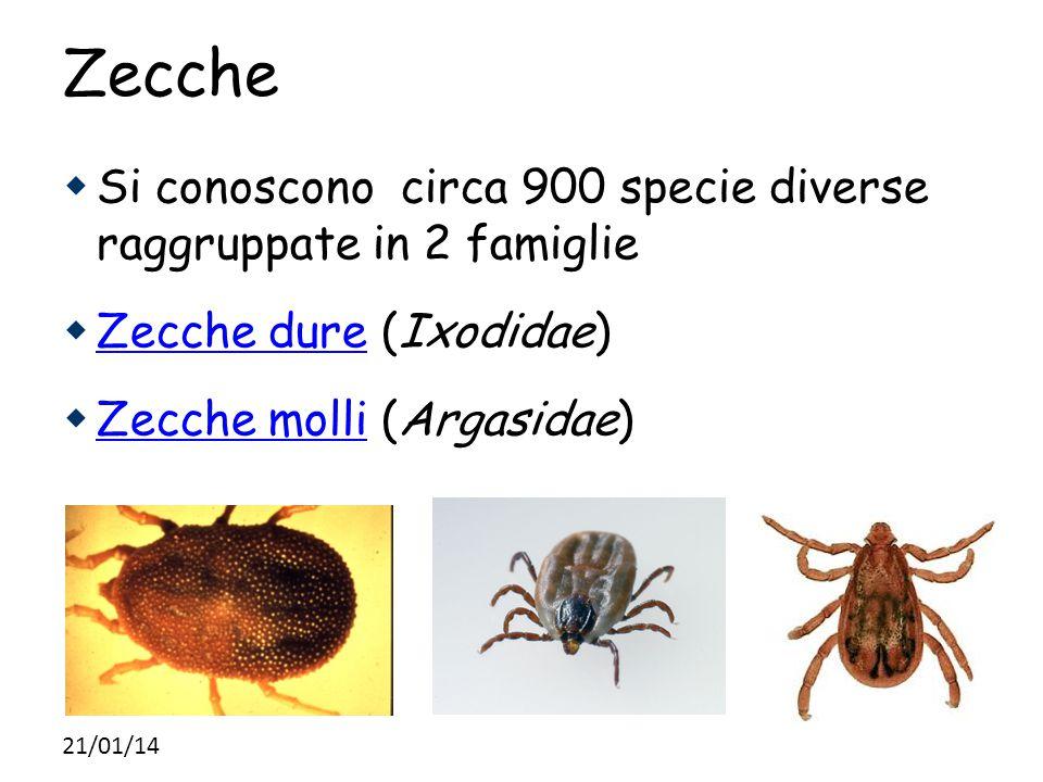 Zecche  Si conoscono circa 900 specie diverse raggruppate in 2 famiglie  Zecche dure (Ixodidae)  Zecche molli (Argasidae) 21/01/14