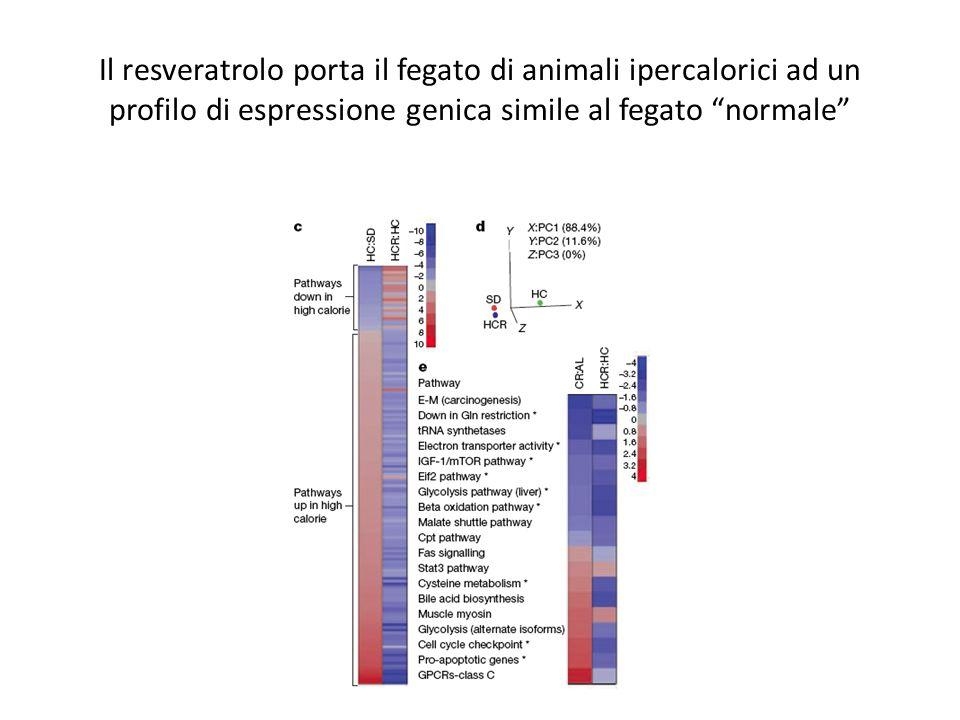 Il resveratrolo porta il fegato di animali ipercalorici ad un profilo di espressione genica simile al fegato normale