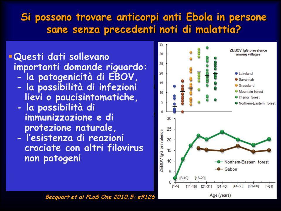 Si possono trovare anticorpi anti Ebola in persone sane senza precedenti noti di malattia?  IgG anti EBOV nel 15,3% dei 4.349 abitanti di 220 villagg