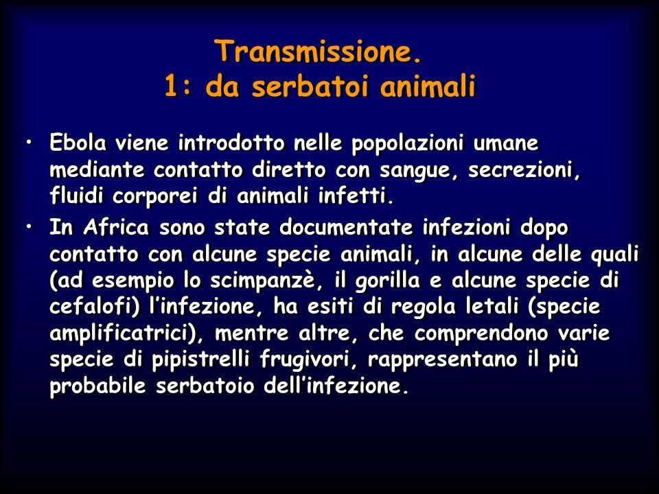 Transmissione. 1: da serbatoi animali Ebola viene introdotto nelle popolazioni umane mediante contatto diretto con sangue, secrezioni, fluidi corporei