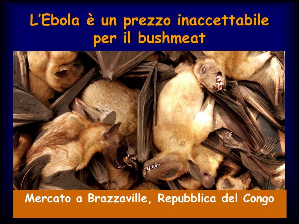 L'Ebola è un prezzo inaccettabile per il bushmeat Mercato a Brazzaville, Repubblica del Congo