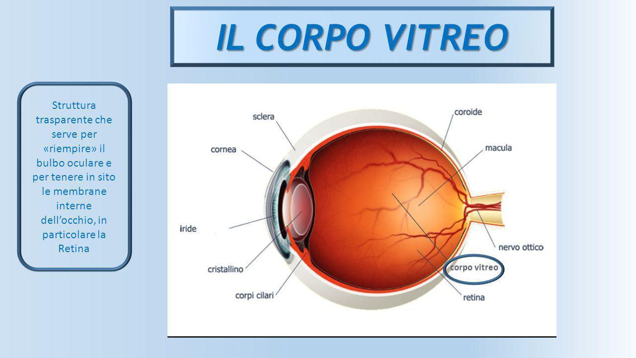 IL CORPO VITREO corpo vitreo Struttura trasparente che serve per «riempire» il bulbo oculare e per tenere in sito le membrane interne dell'occhio, in