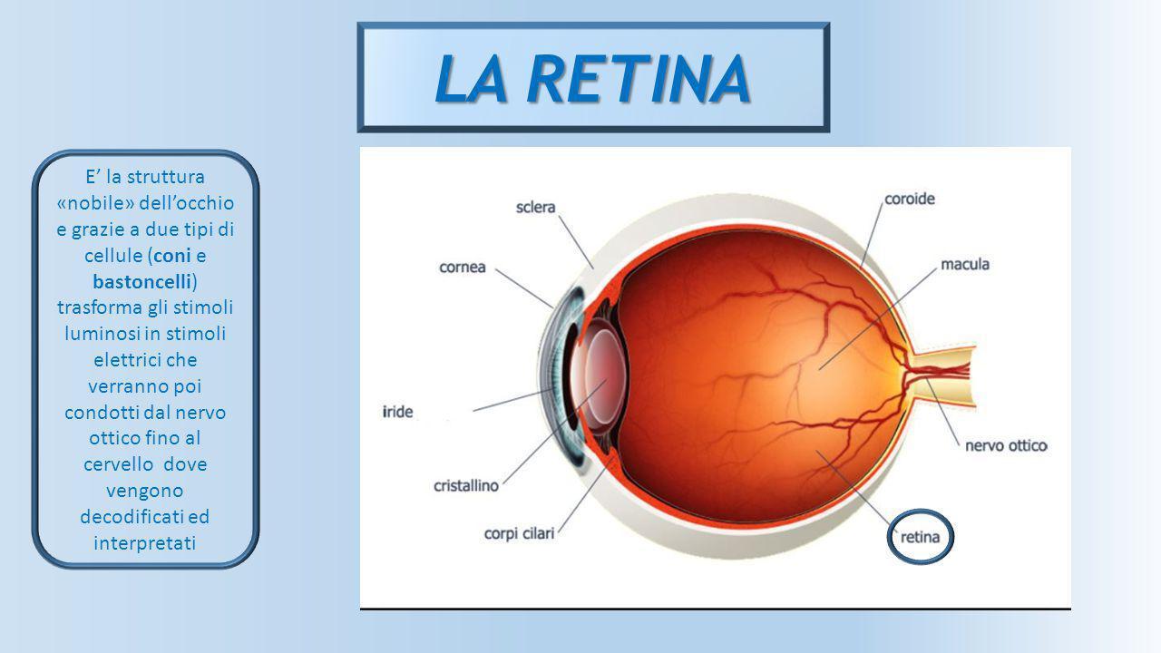 LA RETINA E' la struttura «nobile» dell'occhio e grazie a due tipi di cellule (coni e bastoncelli) trasforma gli stimoli luminosi in stimoli elettrici