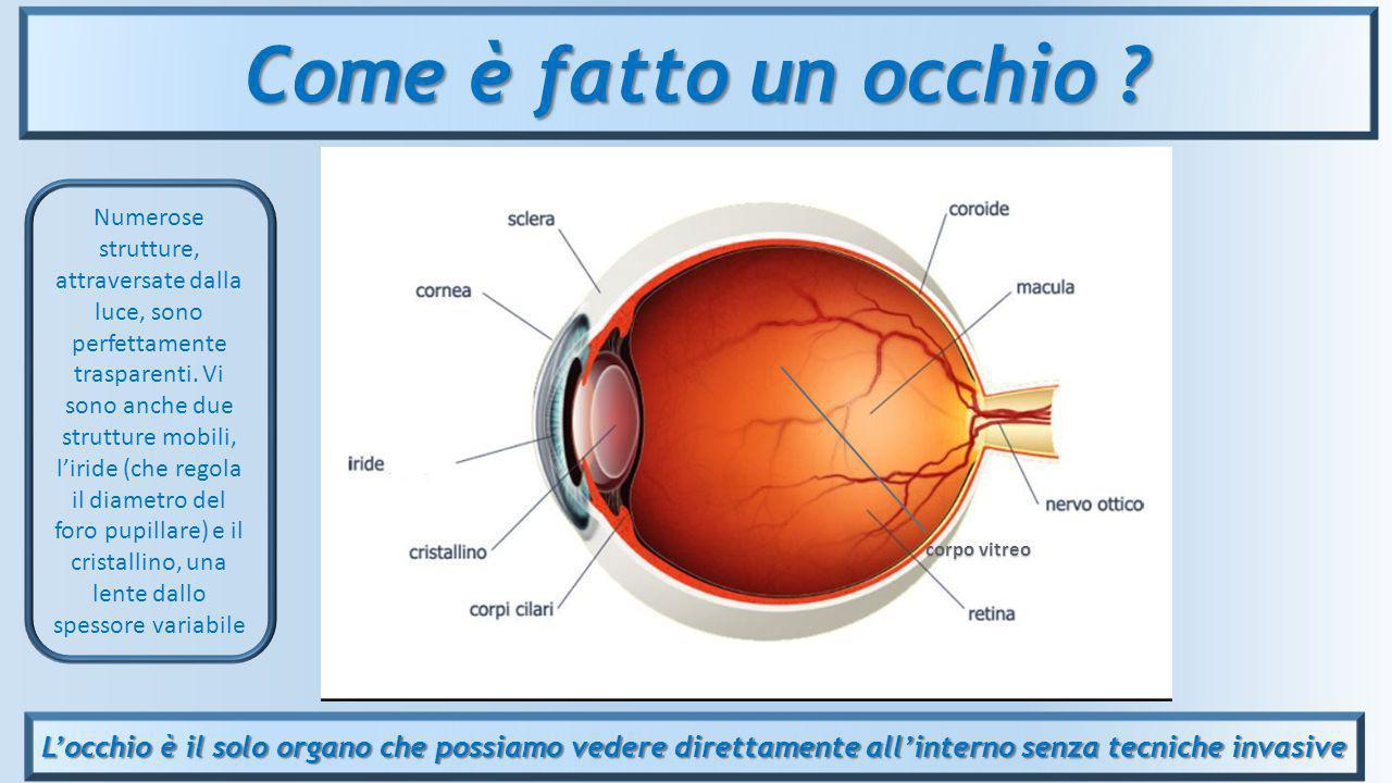 L'occhio è il solo organo che possiamo vedere direttamente all'interno senza tecniche invasive Come è fatto un occhio ? corpo vitreo Numerose struttur