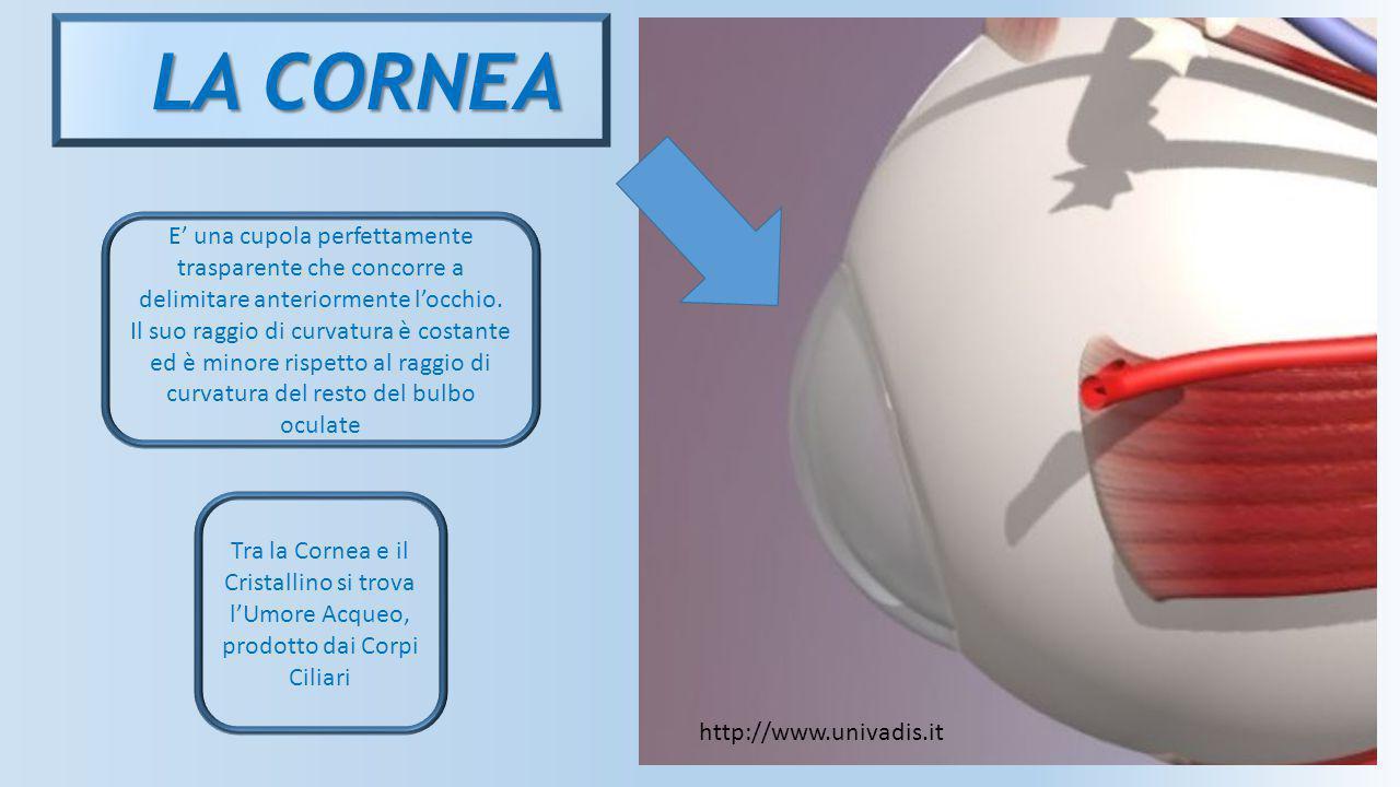 LA CORNEA E' una cupola perfettamente trasparente che concorre a delimitare anteriormente l'occhio. Il suo raggio di curvatura è costante ed è minore