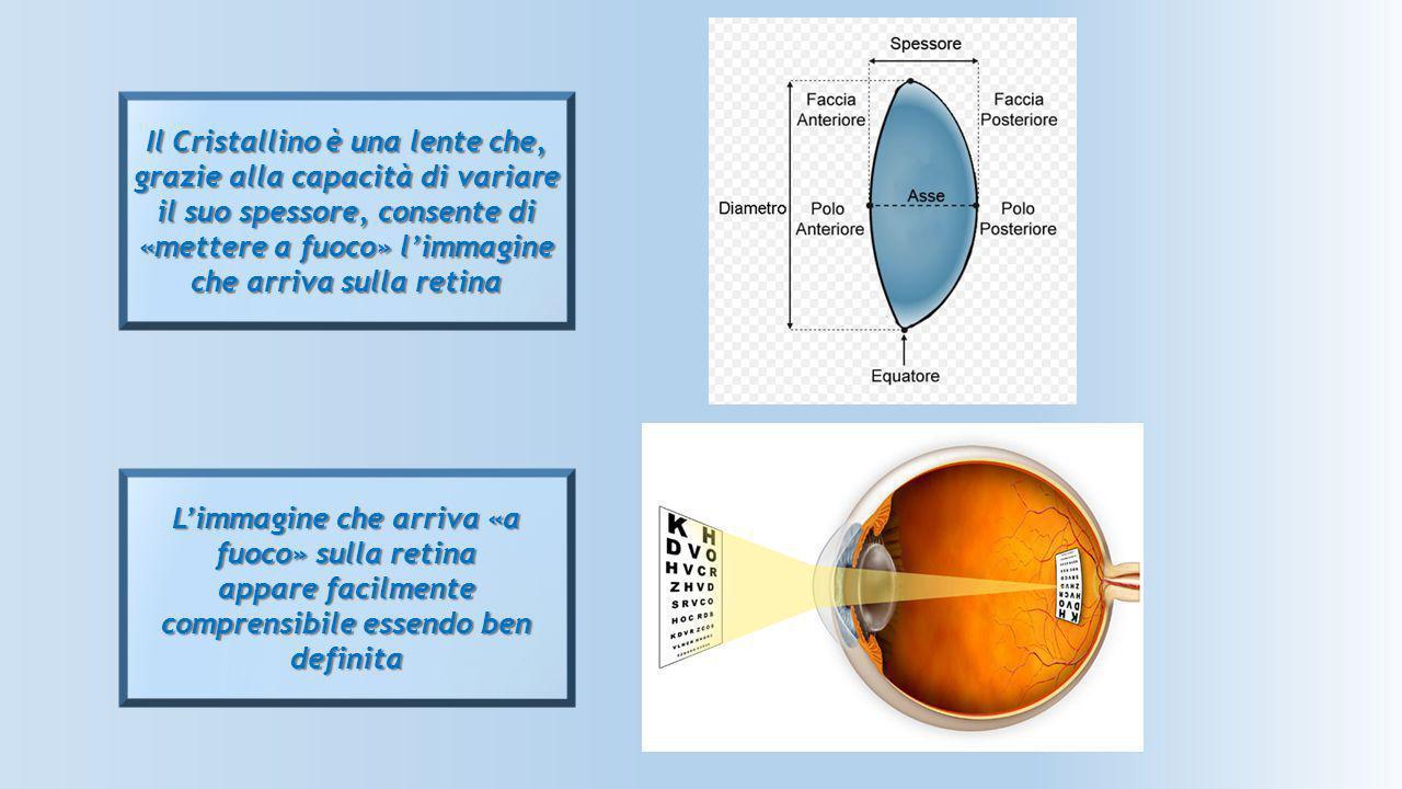 L'immagine che arriva «a fuoco» sulla retina appare facilmente comprensibile essendo ben definita Il Cristallino è una lente che, grazie alla capacità
