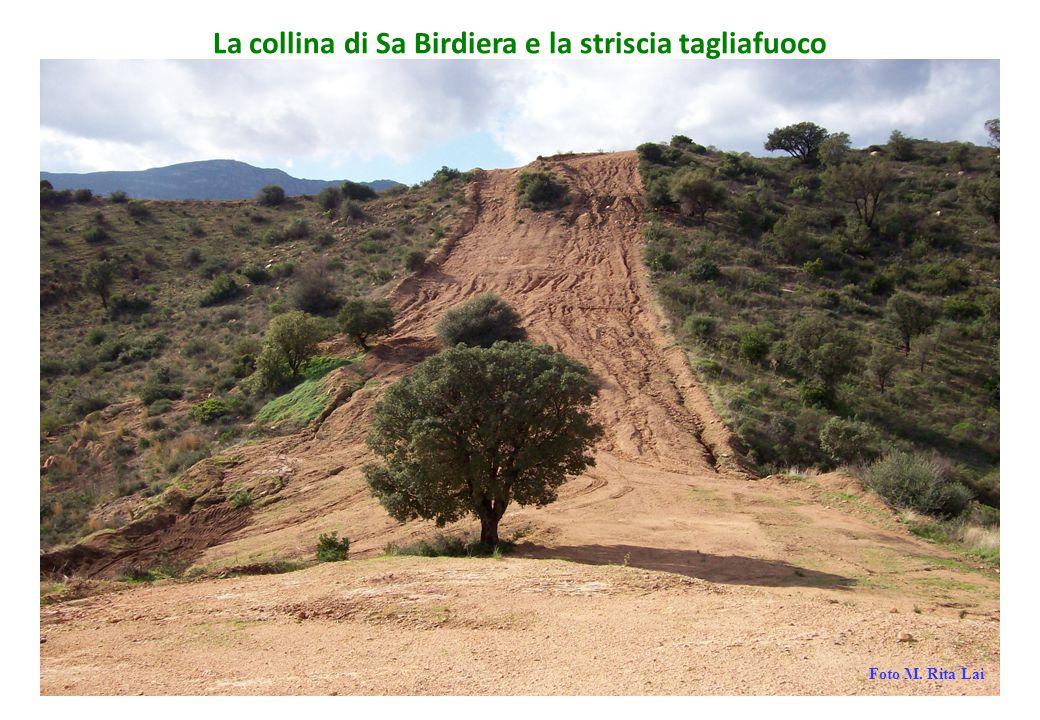 La collina di Sa Birdiera e la striscia tagliafuoco Foto M. Rita Lai