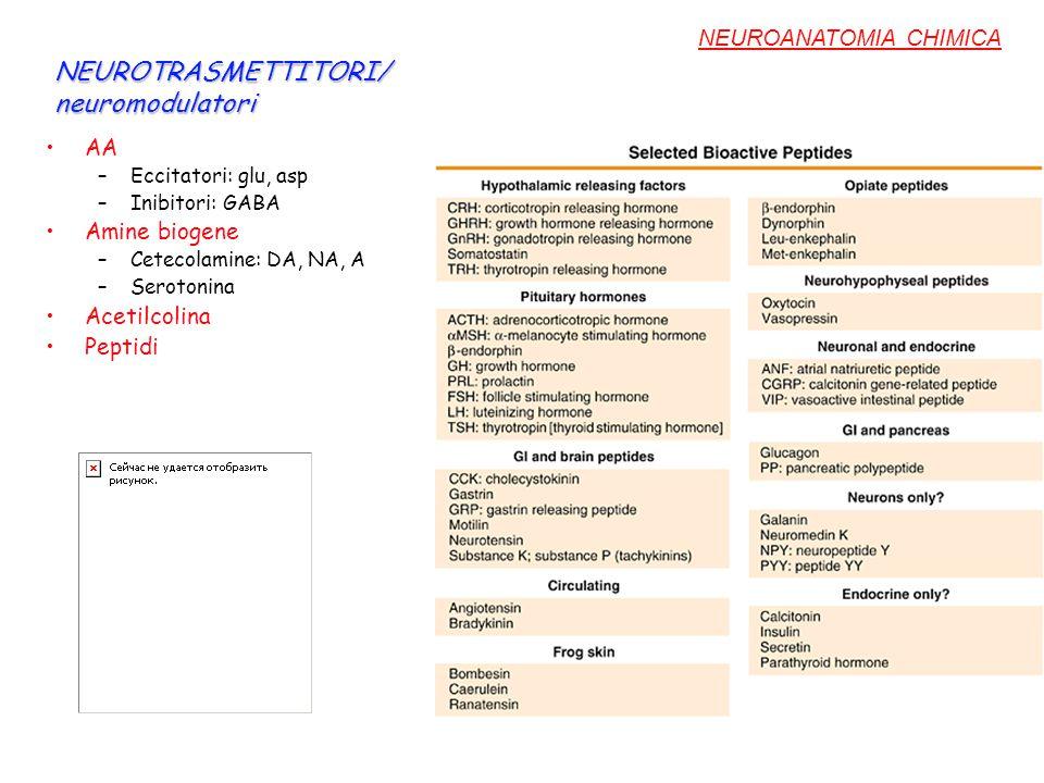NEUROTRASMETTITORI/ neuromodulatori AA –Eccitatori: glu, asp –Inibitori: GABA Amine biogene –Cetecolamine: DA, NA, A –Serotonina Acetilcolina Peptidi