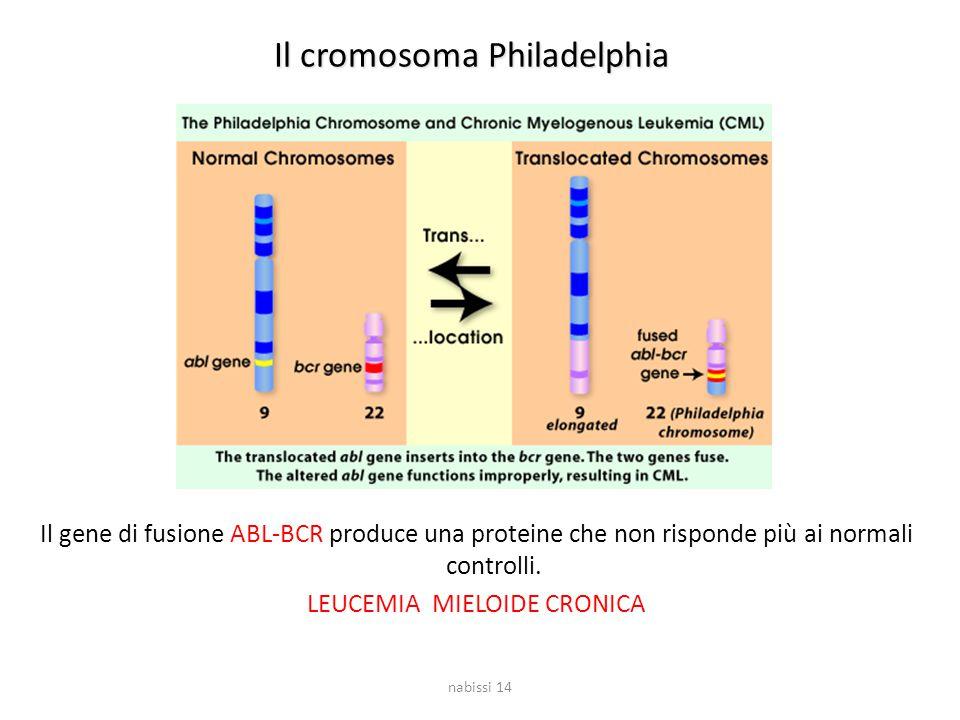 Il cromosoma Philadelphia Il gene di fusione ABL-BCR produce una proteine che non risponde più ai normali controlli. LEUCEMIA MIELOIDE CRONICA nabissi