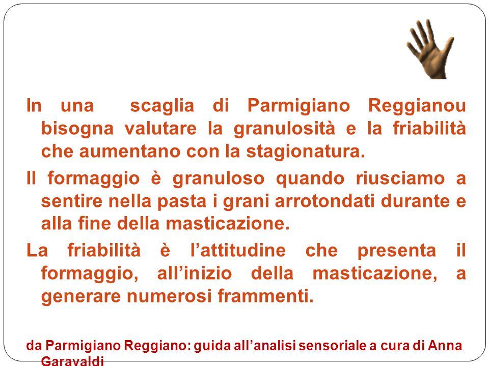In una scaglia di Parmigiano Reggianou bisogna valutare la granulosità e la friabilità che aumentano con la stagionatura. Il formaggio è granuloso qua