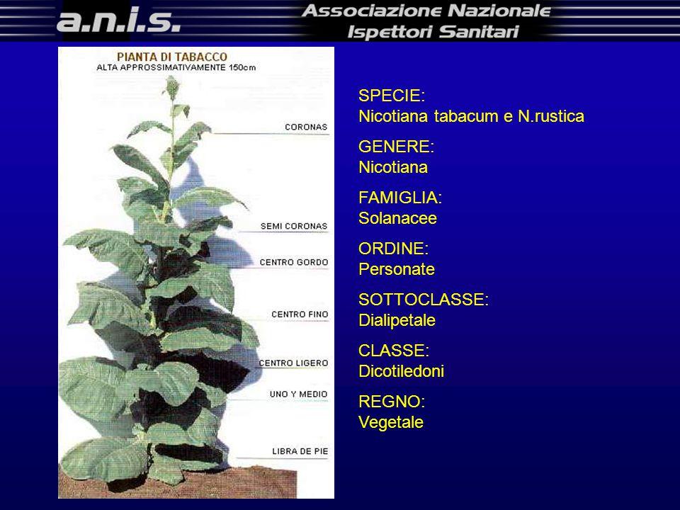 SPECIE: Nicotiana tabacum e N.rustica GENERE: Nicotiana FAMIGLIA: Solanacee ORDINE: Personate SOTTOCLASSE: Dialipetale CLASSE: Dicotiledoni REGNO: Vegetale