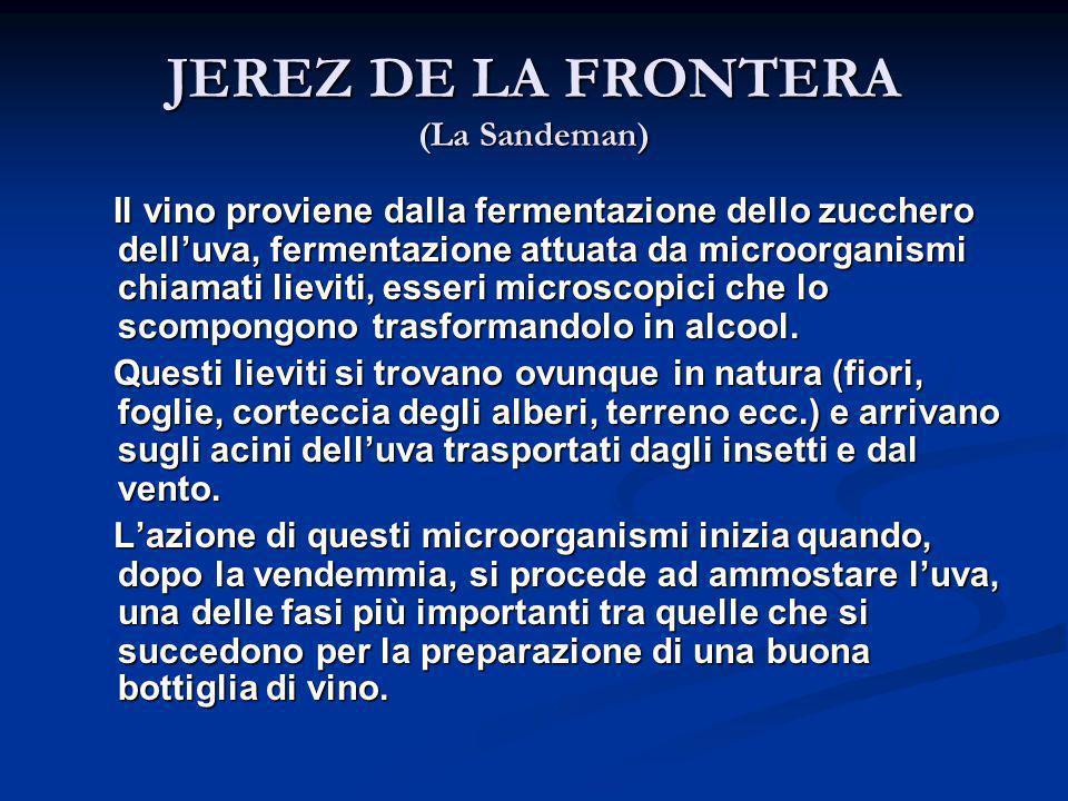 JEREZ DE LA FRONTERA (La Sandeman) Il vino proviene dalla fermentazione dello zucchero dell'uva, fermentazione attuata da microorganismi chiamati liev