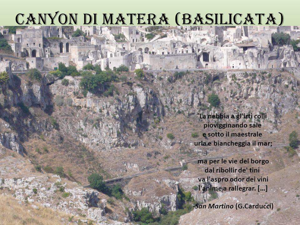 Sud: PUGLIA/BASILICATA FLORA La vegetazione legnosa è rappresentata da pinete lungo il litorale del Gargano e del Golfo di Taranto, e da boschi di lecci nel Salento.