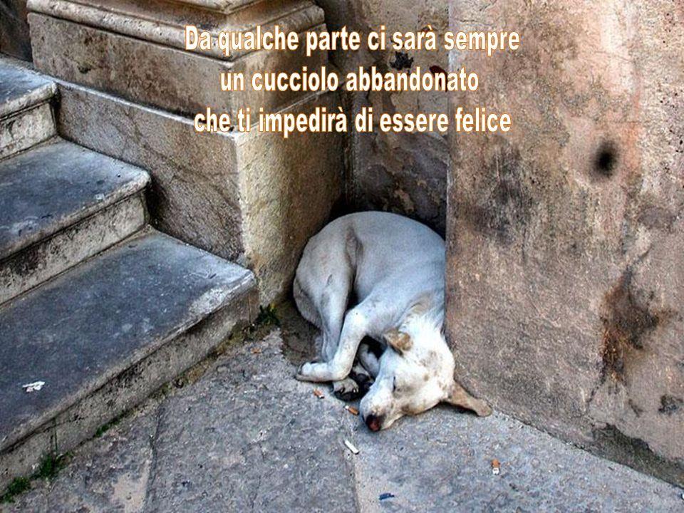 Al mondo non esiste trattamento psichiatrico migliore di un cucciolo che ti lecca la faccia.