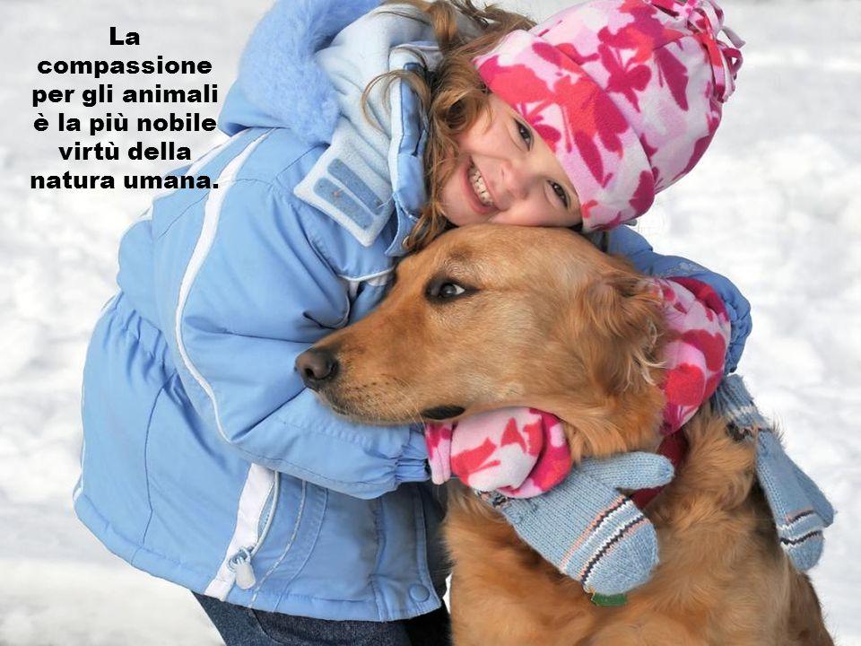 Tutti gli esseri umani devono cercare di amare un cane; solo così possono capire cosa sia veramente l'amore.