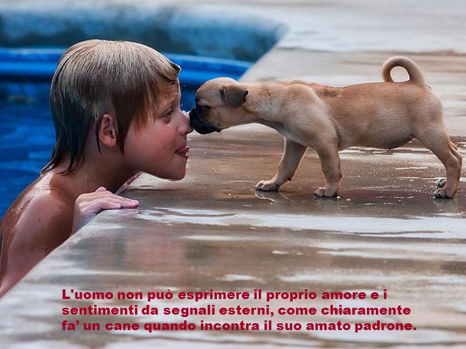 L uomo non può esprimere il proprio amore e i sentimenti da segnali esterni, come chiaramente fa' un cane quando incontra il suo amato padrone.