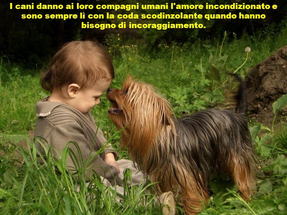 L'uomo non può esprimere il proprio amore e i sentimenti da segnali esterni, come chiaramente fa' un cane quando incontra il suo amato padrone.
