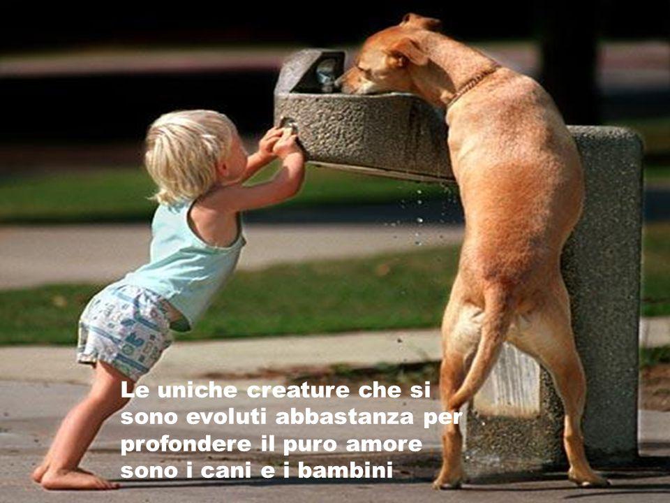 I cani hanno un modo di trovare le persone che hanno bisogno di loro prescindendo dalla pochezza che non sanno nemmeno di avere.