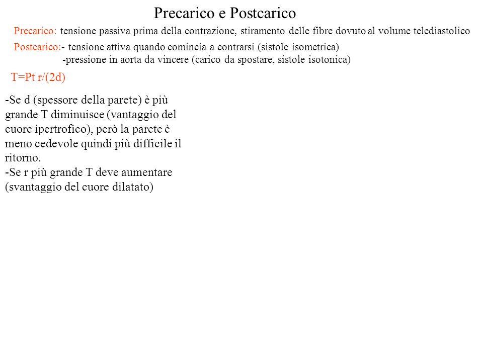 Precarico e Postcarico Precarico: tensione passiva prima della contrazione, stiramento delle fibre dovuto al volume telediastolico Postcarico:- tensio