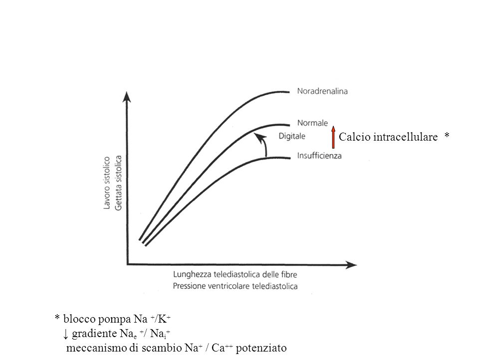 Calcio intracellulare* * blocco pompa Na + /K + ↓ gradiente Na e + / Na i + meccanismo di scambio Na + / Ca ++ potenziato
