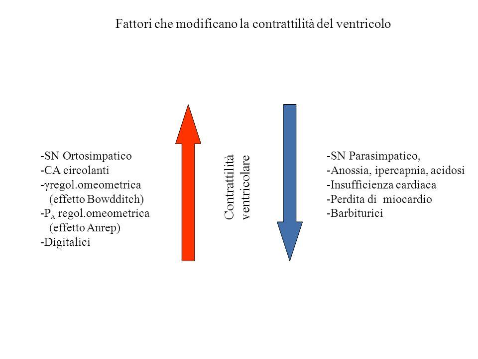 Fattori che modificano la contrattilità del ventricolo Contrattilità ventricolare -SN Ortosimpatico -CA circolanti -γregol.omeometrica (effetto Bowddi