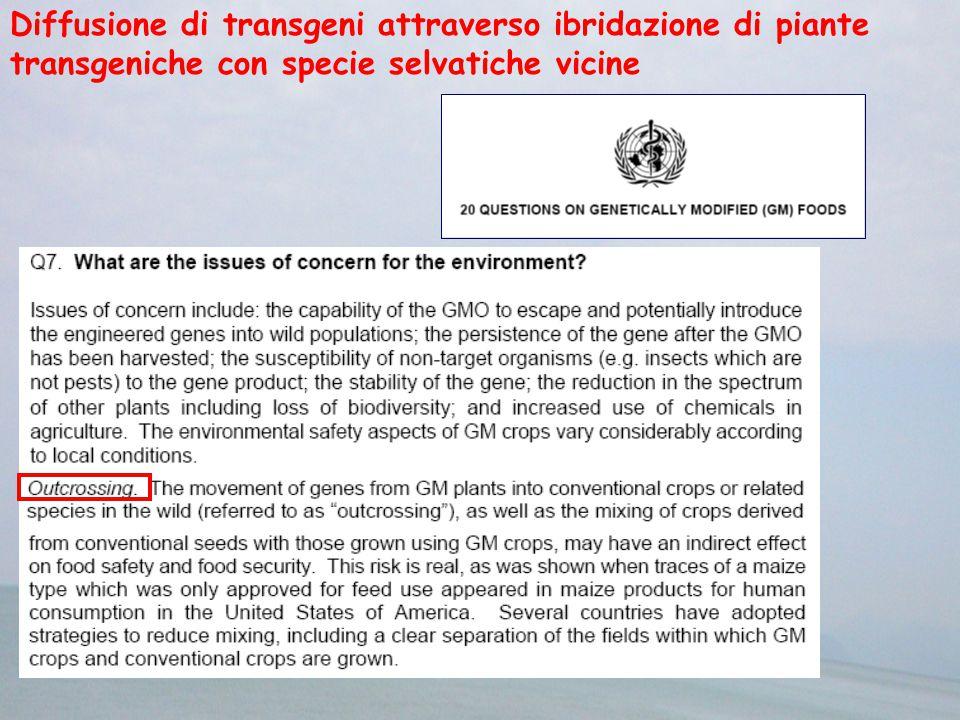Diffusione di transgeni attraverso ibridazione di piante transgeniche con specie selvatiche vicine