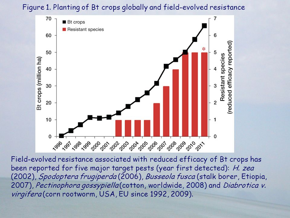 Field-evolved resistance associated with reduced efficacy of Bt crops has been reported for five major target pests (year first detected): H. zea (200