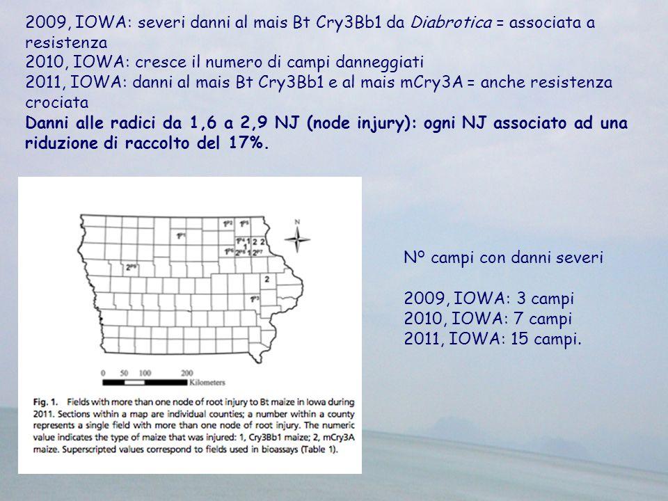 2009, IOWA: severi danni al mais Bt Cry3Bb1 da Diabrotica = associata a resistenza 2010, IOWA: cresce il numero di campi danneggiati 2011, IOWA: danni al mais Bt Cry3Bb1 e al mais mCry3A = anche resistenza crociata Danni alle radici da 1,6 a 2,9 NJ (node injury): ogni NJ associato ad una riduzione di raccolto del 17%.