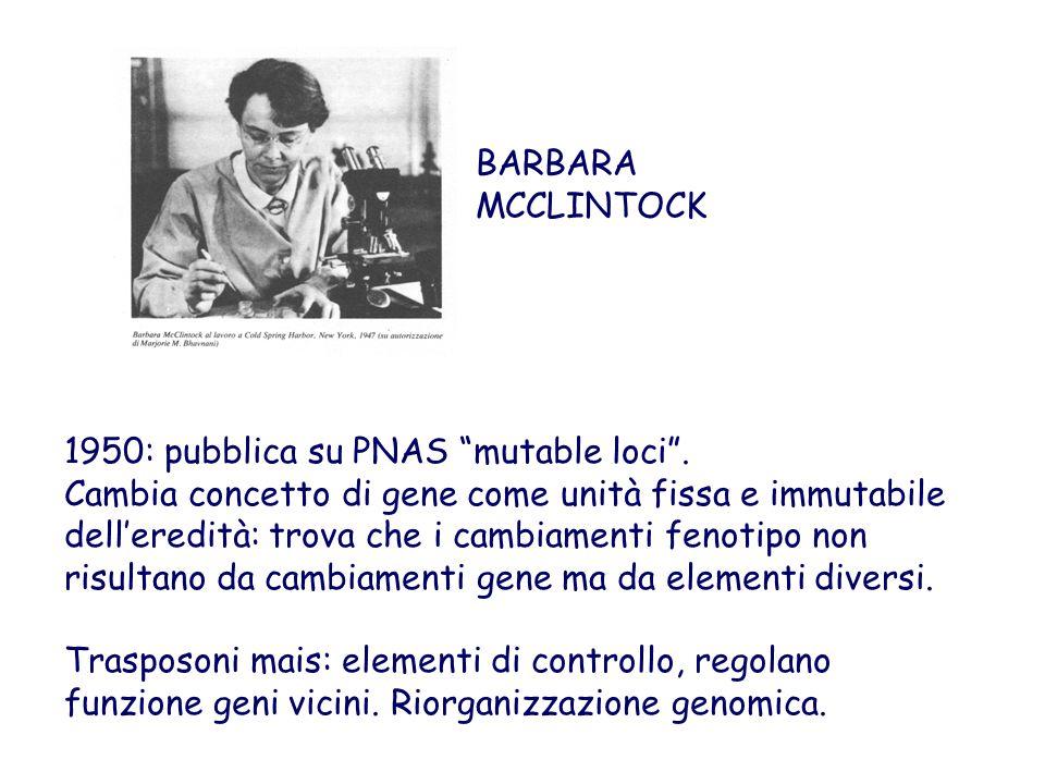 """1950: pubblica su PNAS """"mutable loci"""". Cambia concetto di gene come unità fissa e immutabile dell'eredità: trova che i cambiamenti fenotipo non risult"""
