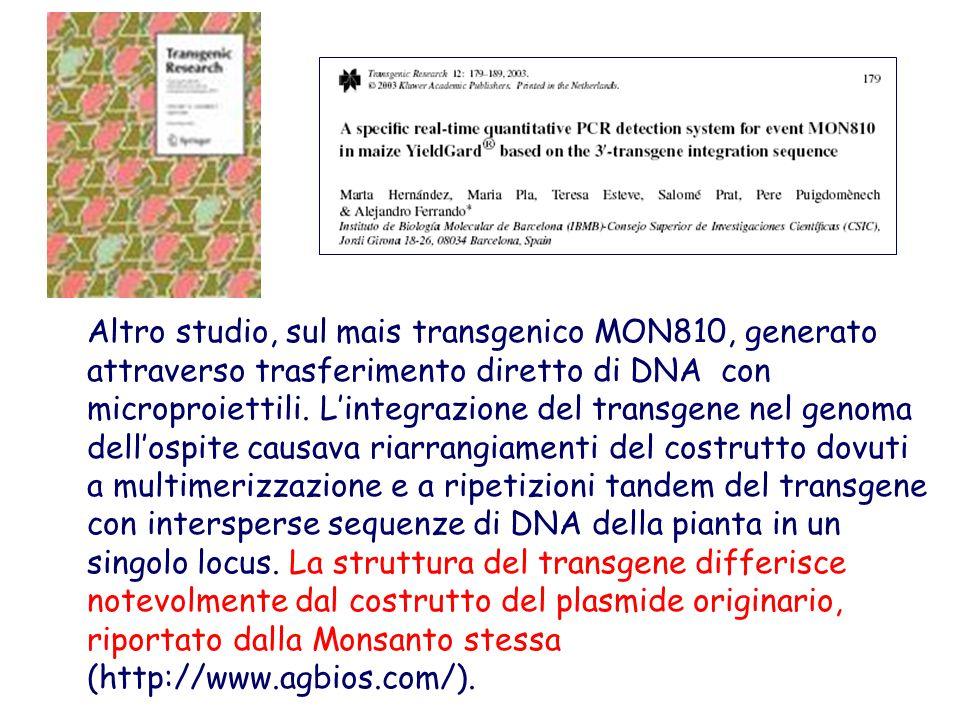 Altro studio, sul mais transgenico MON810, generato attraverso trasferimento diretto di DNA con microproiettili. L'integrazione del transgene nel geno
