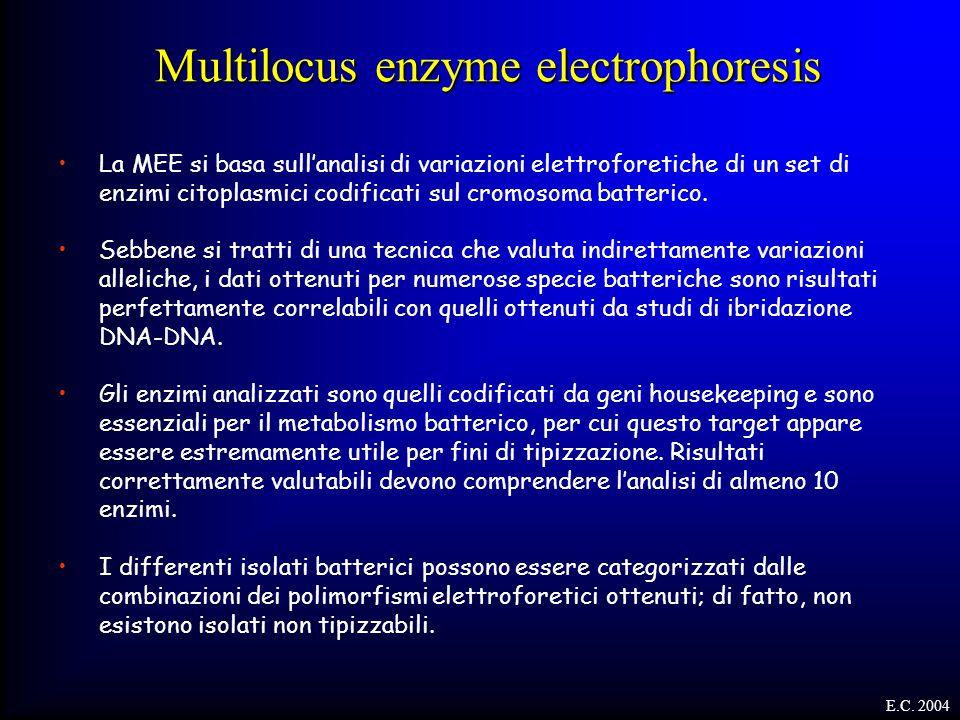 E.C. 2004 Multilocus enzyme electrophoresis La MEE si basa sull'analisi di variazioni elettroforetiche di un set di enzimi citoplasmici codificati sul
